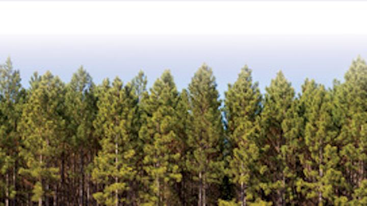 Osmose Tree Background