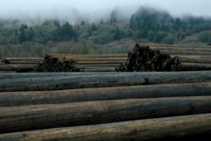 Wood Utility Poles and Preservative Choices | Utility Products