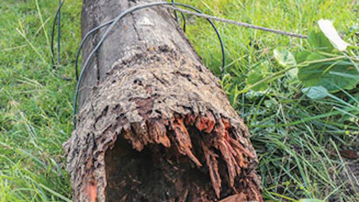 1605pgleh Pole Life  P03