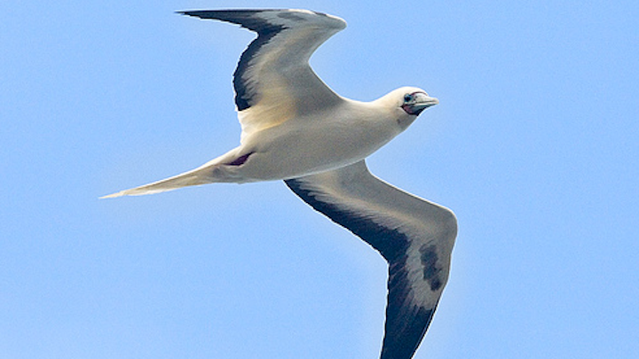 Content Dam Elp Online Articles 2014 06 Hawaii Sea Birds
