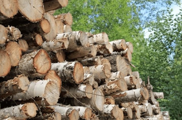 Content Dam Elp Online Articles 2017 11 Wood Biomass November 20 Elp