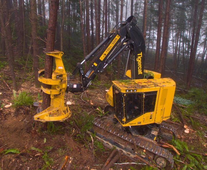 Line construction: Feller buncher for steep slope felling